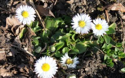Im Frühling angekommen