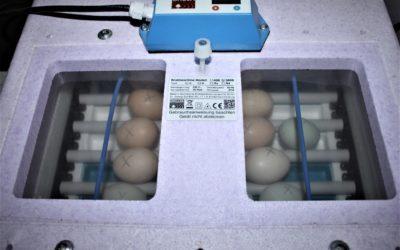Eier zum Ausbrüten